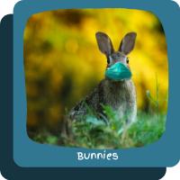 ~Bunnies
